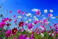 Prolećno fotografisanje - Dudova šuma