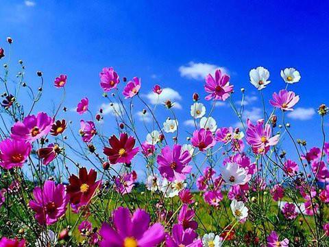 Prolećno fotografisanje