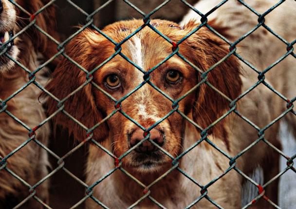 Potpisivanje peticije za strože kažnjavanje zlostavljača životinja