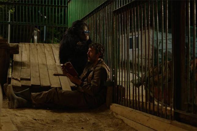 25. Festival evropskog filma Palić: Takmičarski program: Godina majmuna