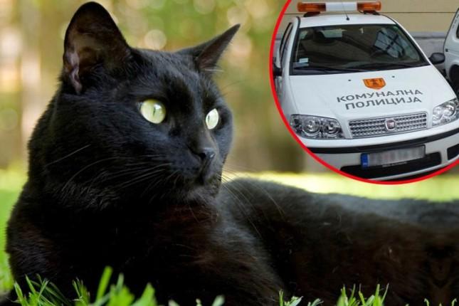 Hranjenje mačaka: humani čin ili kršenje zakona?