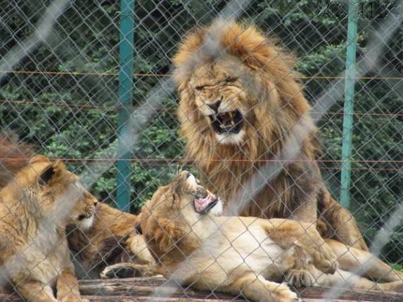 Milion dinara mesečno za tri lava iz Ministarstva energetike?!