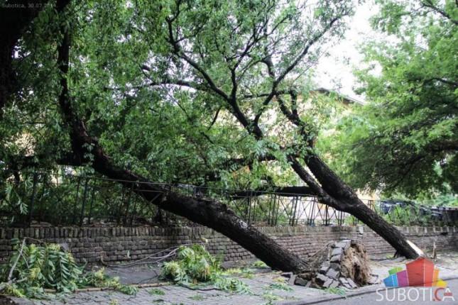 U jučerašnjem nevremenu najviše poziva zbog polomljenih grana i izvaljenih stabala