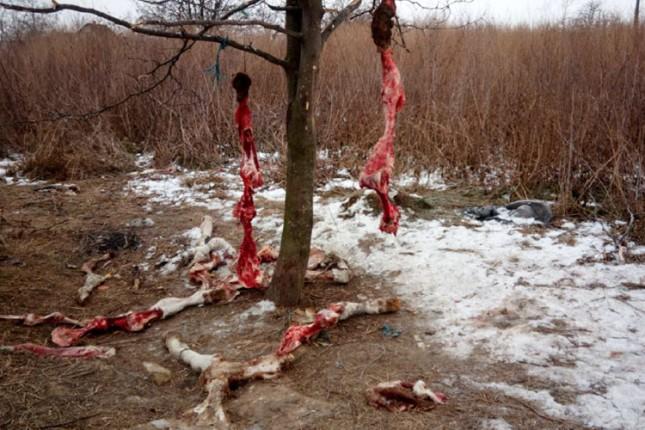 Pokret DJB: Rešiti problem odnošenja uginulih domaćih životinja