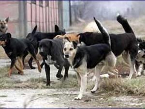 Sve više pasa na subotičkim ulicama