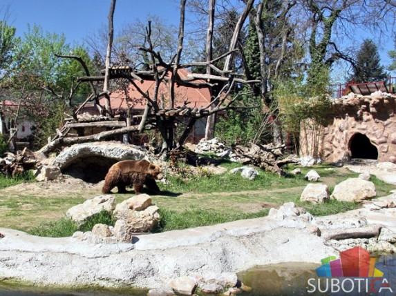 Otvorena volijera za mrkog medveda u Zoo vrtu Palić