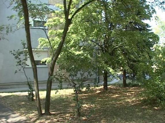 Rešenje o vađenju stabala u ulici Braće Radić