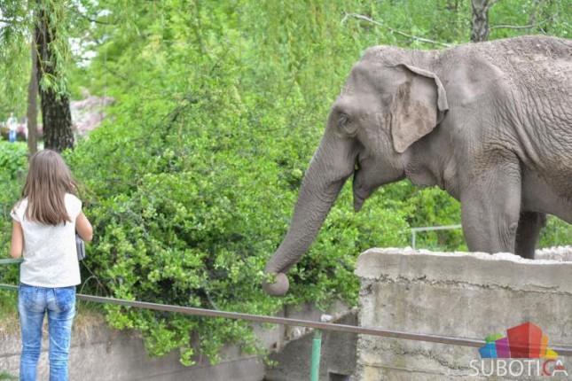 Uginula 41-godišnja slonica Marta
