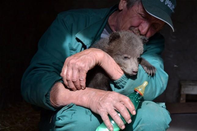 Tri mečeta mrkog medveda uskoro se sele u Rumuniju