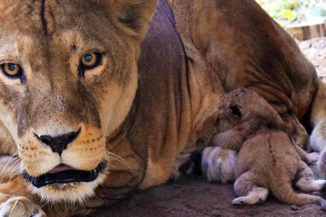 Prinova u Zoo vrtu - kraljevska porodica dobila novog člana
