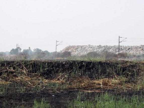 Vrbe i topole za sanaciju zemljišta