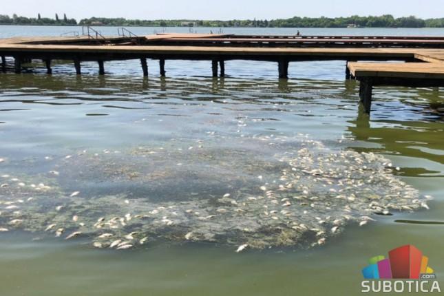 Uginulo oko 600 kilograma ribe u Palićkom jezeru