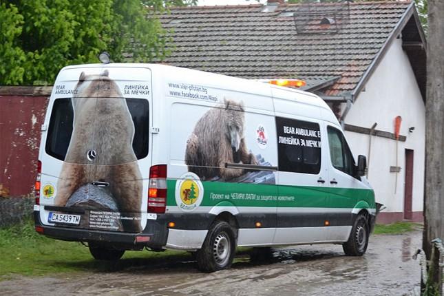 """Tri mečeta mrkog medveda napustila Zoo vrt """"Palić"""""""