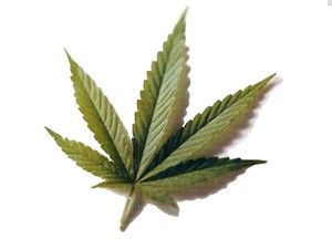 Osumnjičen za neovlašćenu proizvodnju i stavljanje u promet opojnih droga