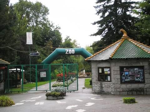 Kako životinje dolaze u ZOO vrt na Paliću?