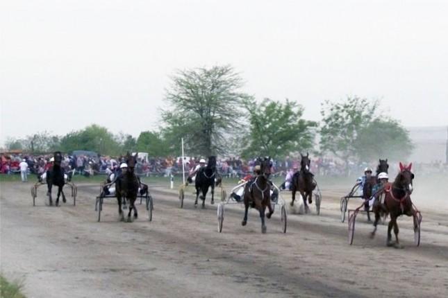 Konjička trka Grada Subotice u nedelju na hipodromu