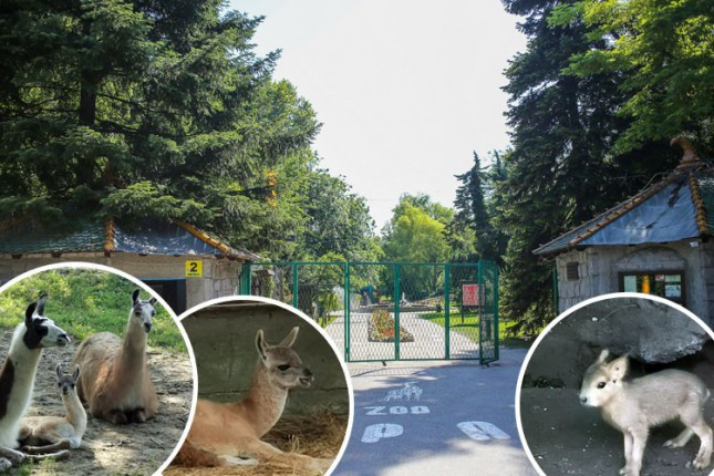 U Zoo vrtu sve vrvi od života