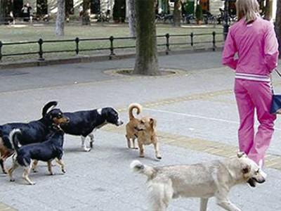 Grad plaća odštetu zbog ujeda psa lutalice