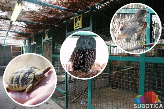 Zoo vrt na Paliću sigurna kuća za divlje životinje