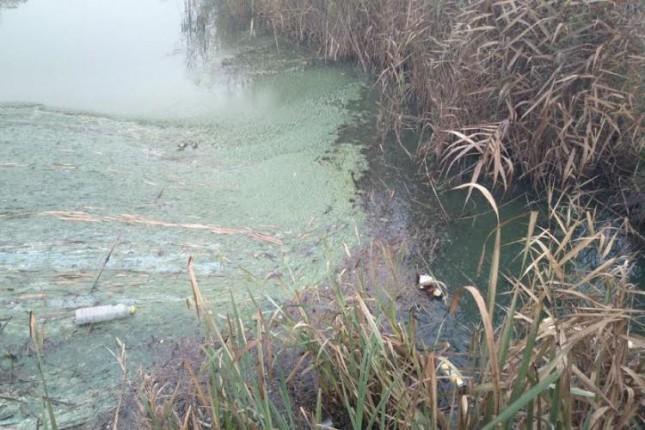 Raščišćavanje zagađenog kanala Palić-Ludaš