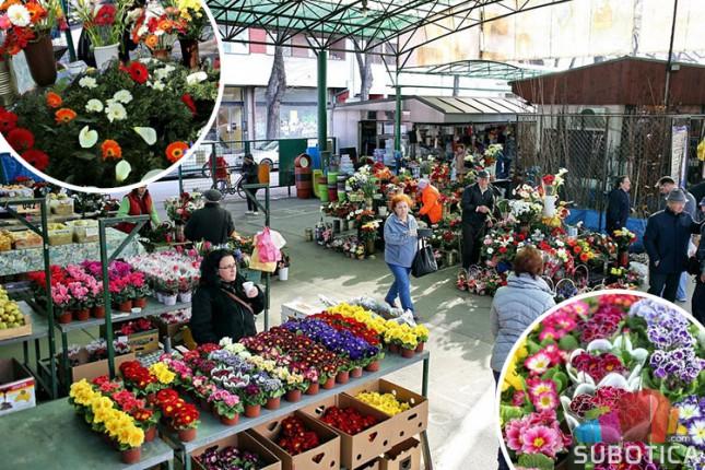 Bogata ponuda cveća na pijacama uoči praznika