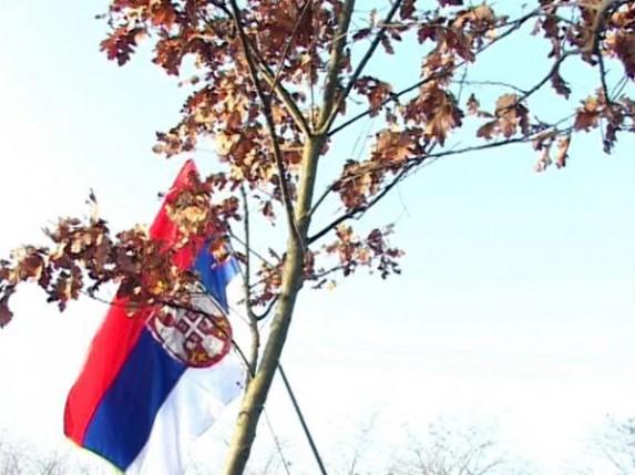 """SKC """"Sveti Sava"""" tradicionalno organizuje seču badnjaka"""