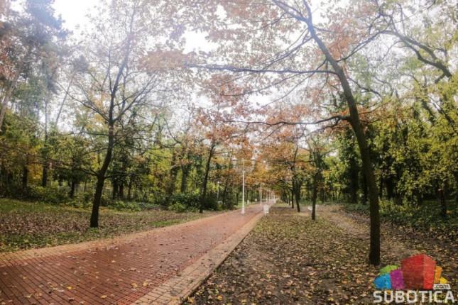 Uklanja se 40 stabala gelegunje iz Aleje hrastova na Paliću
