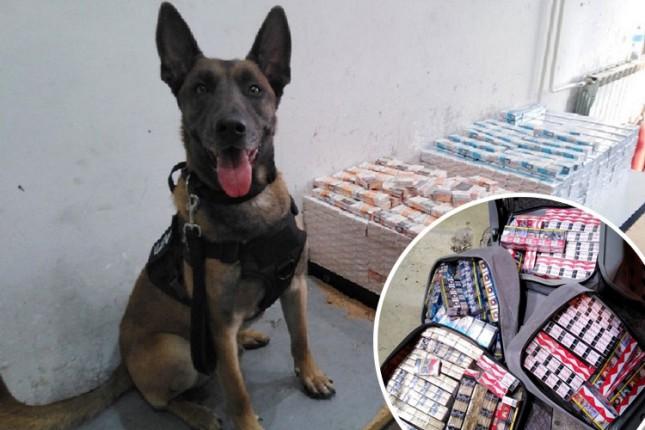 Carinskog psa njuh nepogrešivo odveo do krijumčarenih cigareta