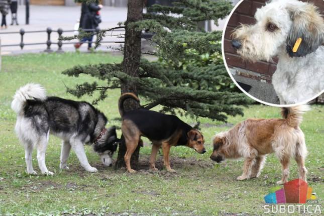 Psi sa narandžastom markicom bezbedni po ljude i okolinu