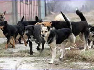 Postignut dogovor oko napuštenih pasa