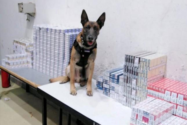 Carinski pas otkrio krijumčarene cigarete