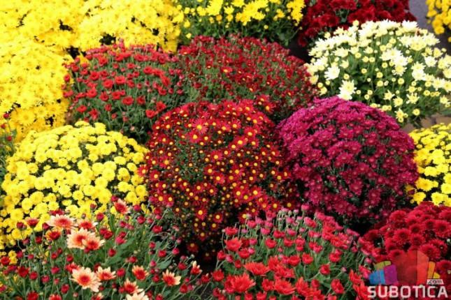 Sajam cveća odložen za narednu sedmicu