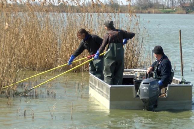 Počeo izlov ribe iz Palićkog jezera