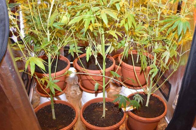 Otkrivena laboratorija za uzgoj marihuane, troje uhapšenih