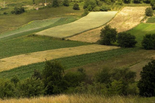 Preko 200 miliona dinara od izdavanja državnog poljoprivrednog zemljišta