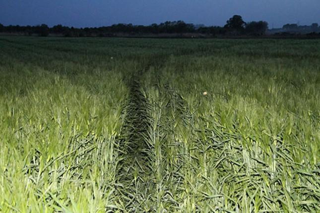 Peticija zbog zgaženog žita