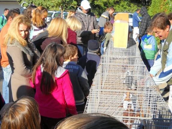 Izložba sitnih životinja u školi Žarko Zrenjanin