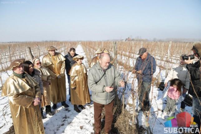Orezivanje vinove loze u Hajdukovu