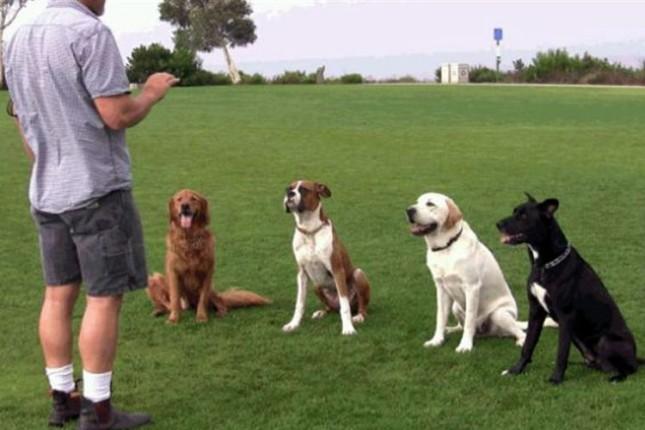 U toku socijalizacija napuštenih pasa