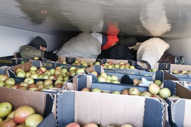 Migranti u hladnjači punoj jabuka