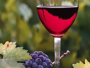 Dan mladog vina sutra na Paliću